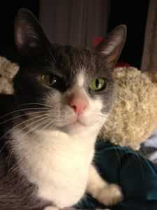 Crsis Services Volunteer Kiley Moore's Cat Simone